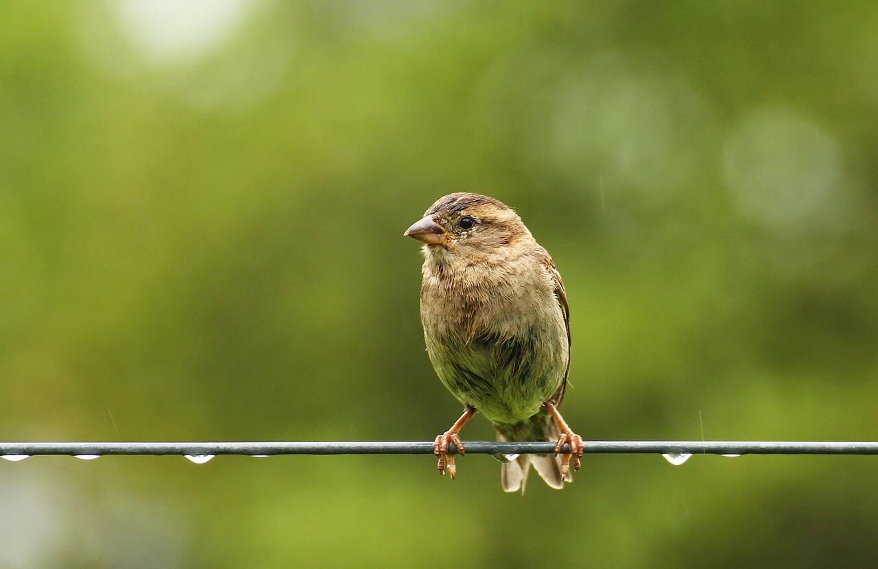 鳩や雀に悩まされていた